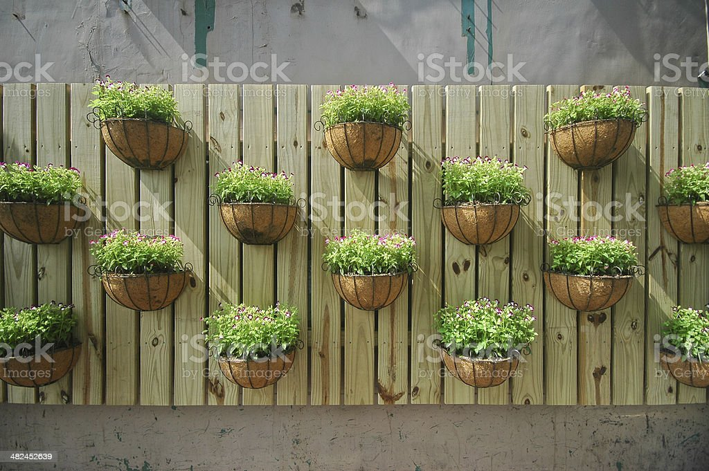 Growing Plants On A Wooden Wall Stock Photo Download Image Now Istock