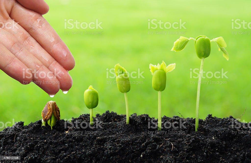 Plantes en pleine croissance - Photo