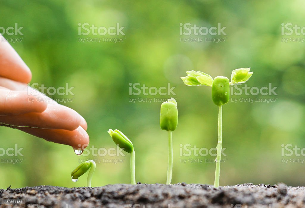 growing plants - Royalty-free 2015 Stock Photo