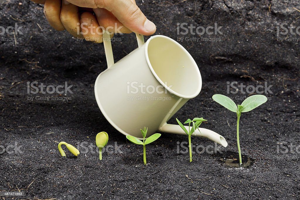 growing plants royalty-free stock photo