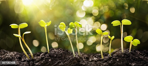 istock Growing Seeds on Natural Sunny Background 937082408