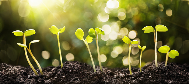 937082408 istock photo Growing Seeds on Natural Sunny Background 937082408