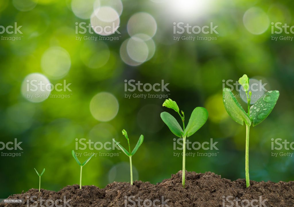 Growing sprout on green bokeh and sunlight background - foto de stock