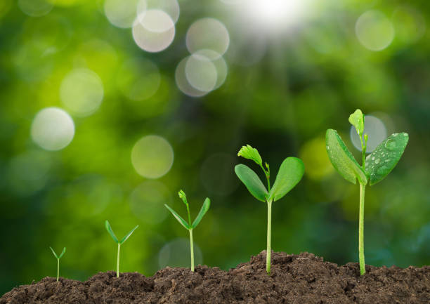 Growing sprout on green bokeh and sunlight background stock photo
