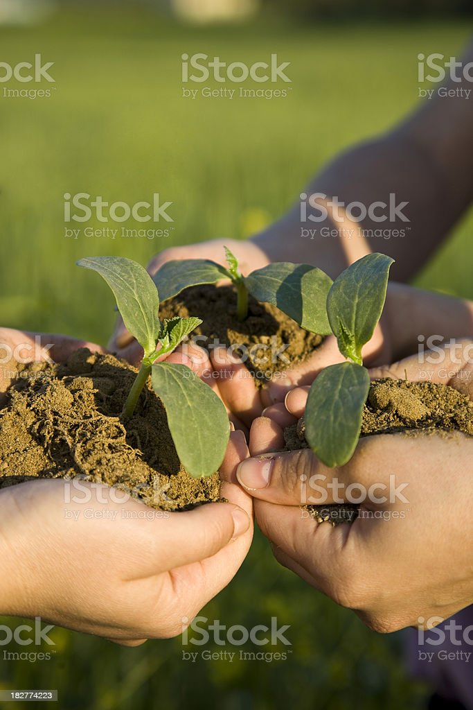 Growing Together royalty-free stock photo