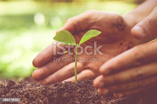 istock growing tree / love nature 486478352