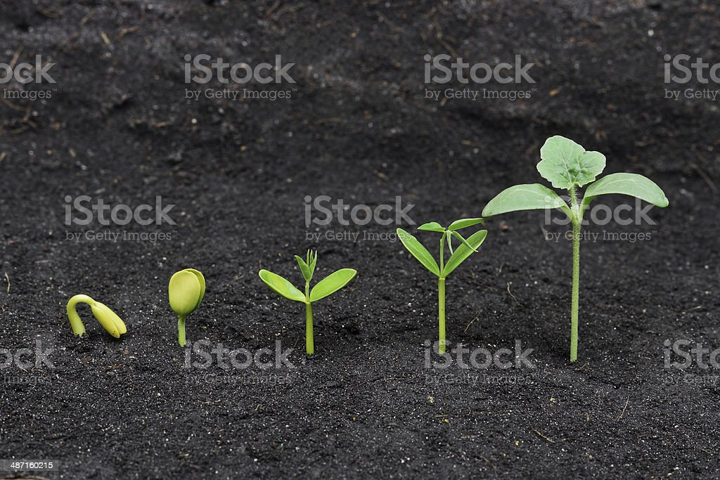 growing tree stock photo