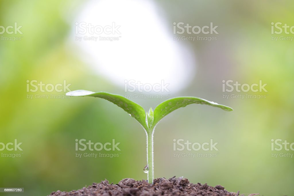 Growing tree royalty-free stock photo
