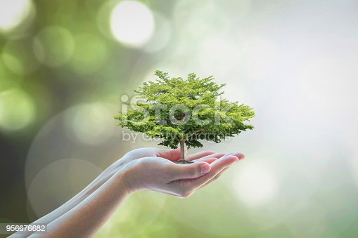 istock Growing tree to save ecological sustainability, sustainable environment, and corporate social responsibility CSR in nature concept 956676682