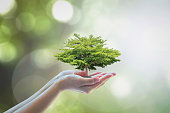 Growing tree to save ecological sustainability, sustainable environment, and corporate social responsibility CSR in nature concept