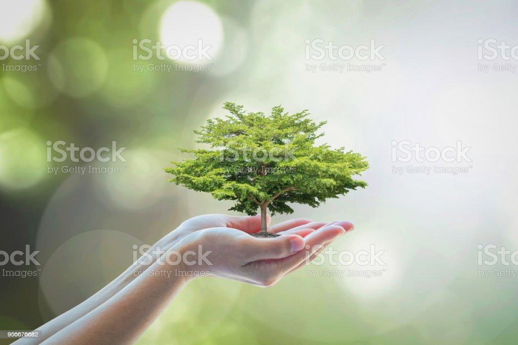 Arbre à croissance pour sauver la durabilité écologique, préservation de l'environnement et responsabilité sociale des entreprises RSE dans le concept de nature - Photo