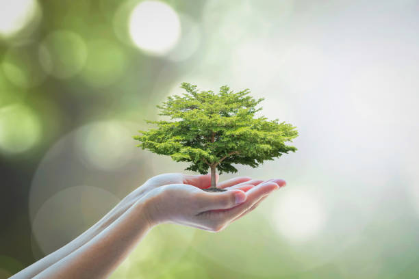 growing tree to save ecological sustainability, sustainable environment, and corporate social responsibility csr in nature concept - solidità foto e immagini stock