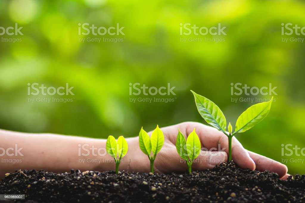 Growing trees leader trees Planting trees Save world concept - foto stock