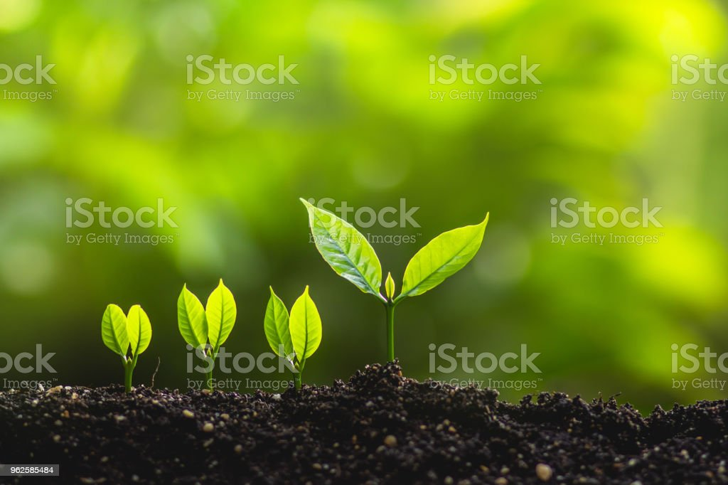 Growing trees leader trees Planting trees Save world concept stock photo