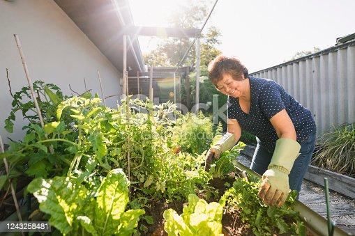 Senior asian woman gardening at her home in Perth, Australia.