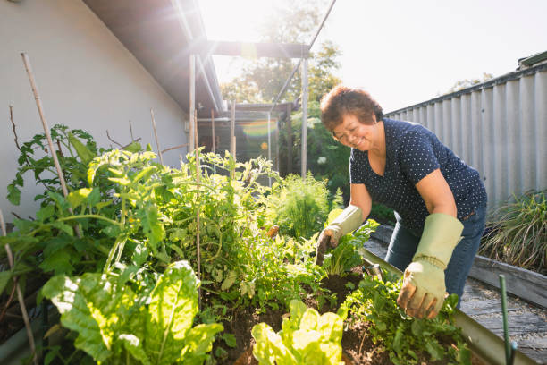 Growing Vegetables at Home stock photo