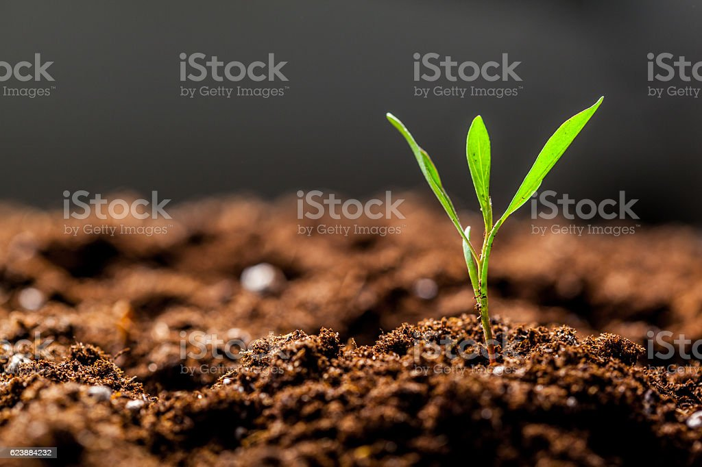 Growing Young Green Seedling Sprout – Foto