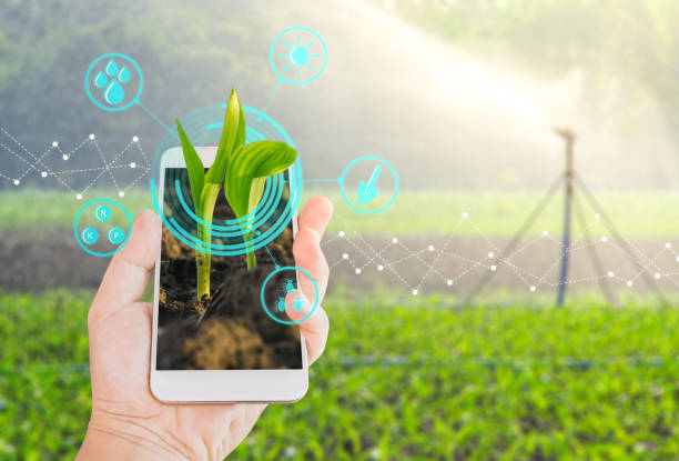 growing young maize seedling in a mobile smartphone on hand with modern agriculture digital technology concepts - agriculture stock pictures, royalty-free photos & images