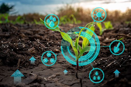 Growing Young Maize Seedling In Cultivated Agricultural Farm Field With Modern Technology Concepts - Fotografie stock e altre immagini di Agricoltura