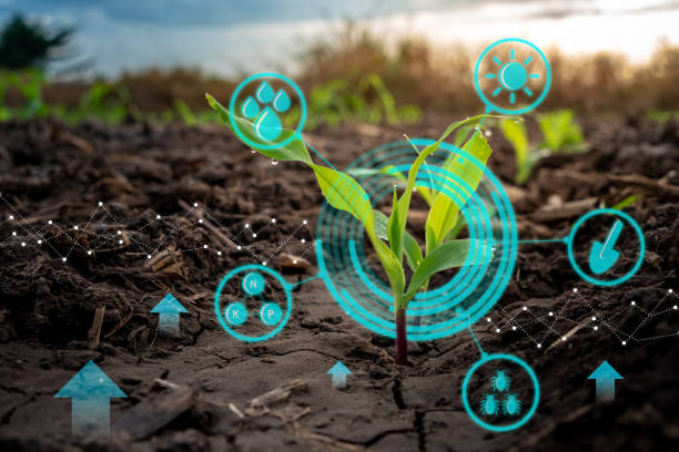 growing young maize seedling in cultivated agricultural farm field with modern technology concepts - bio food foto e immagini stock