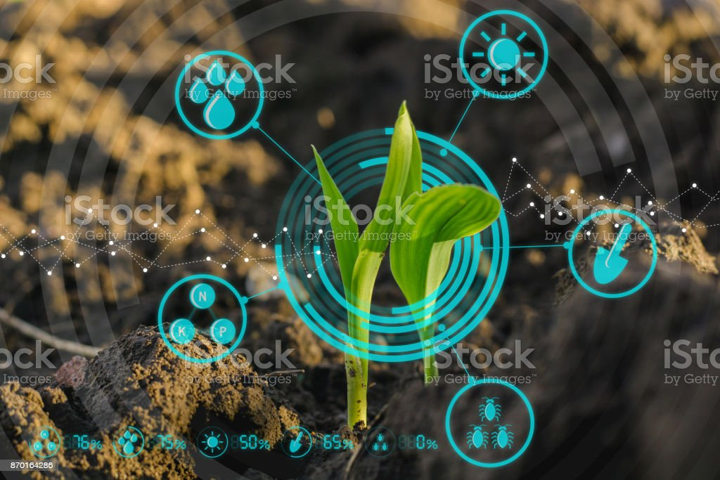 Growing young maize seedling with modern technology concepts stock photo