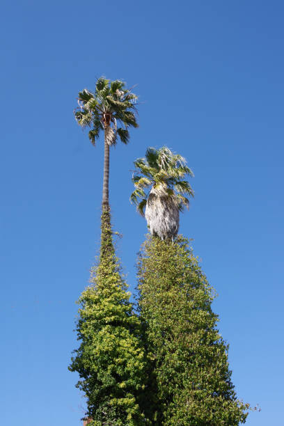 Grown over Palms stock photo