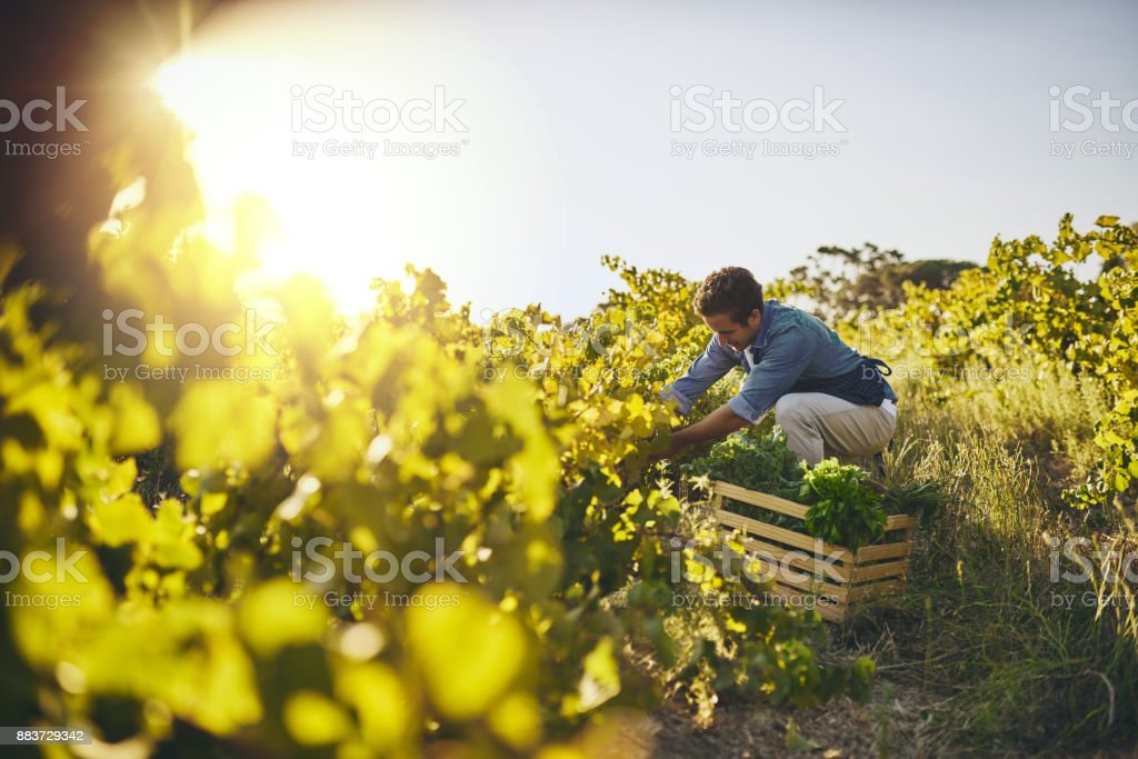 Grown with love and care royalty-free stock photo
