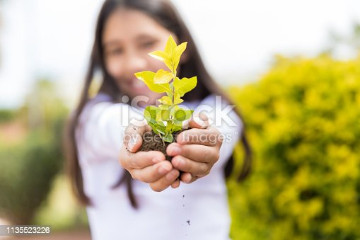 Hands of elementary girl holding small tree with soil in garden
