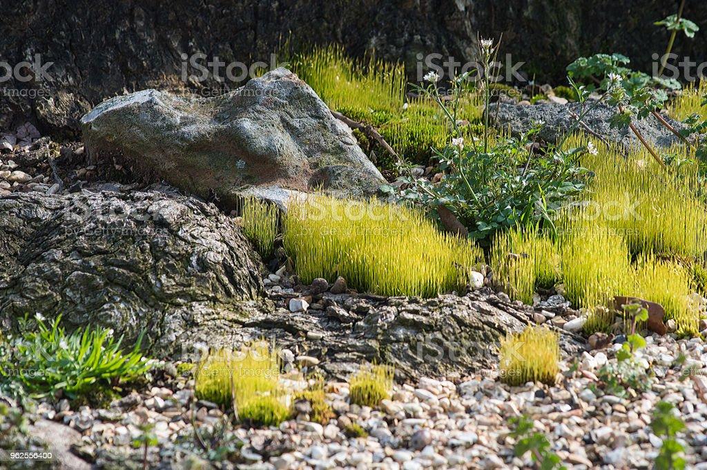 Growth among rocks stock photo