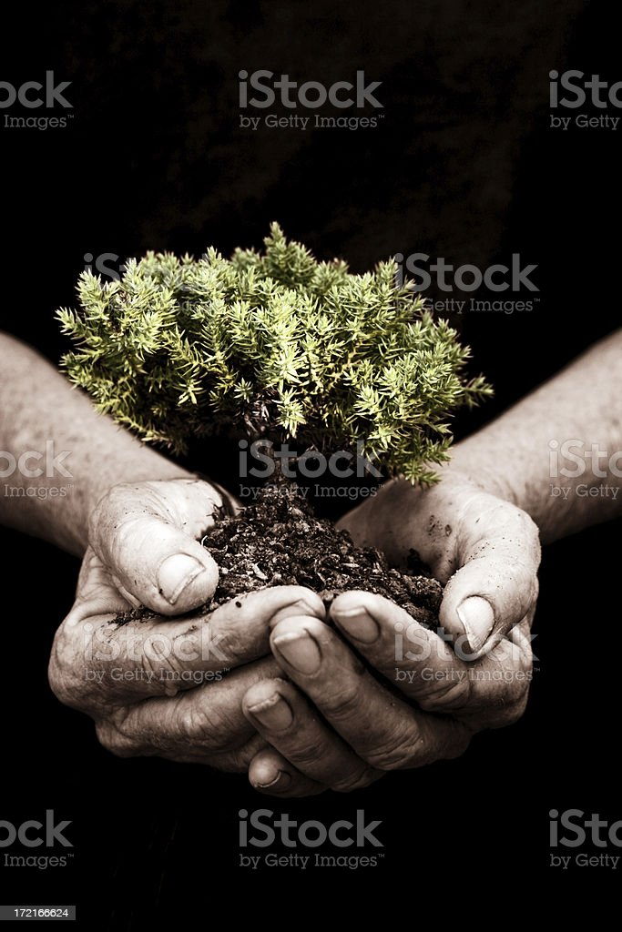 Growth and Development royalty-free stock photo