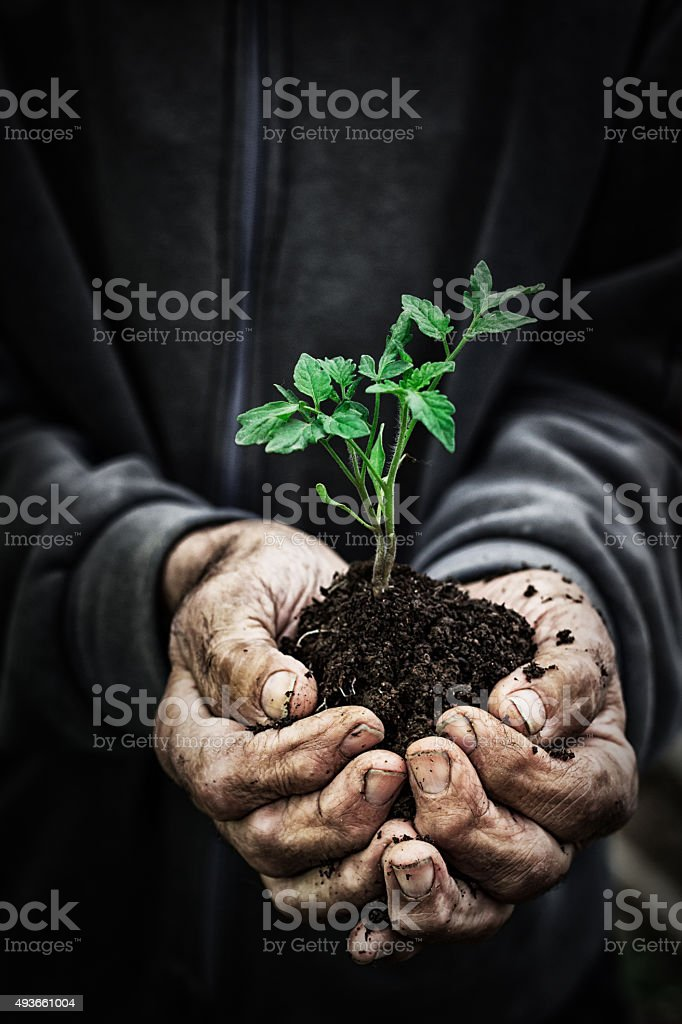 Growth and Development stock photo
