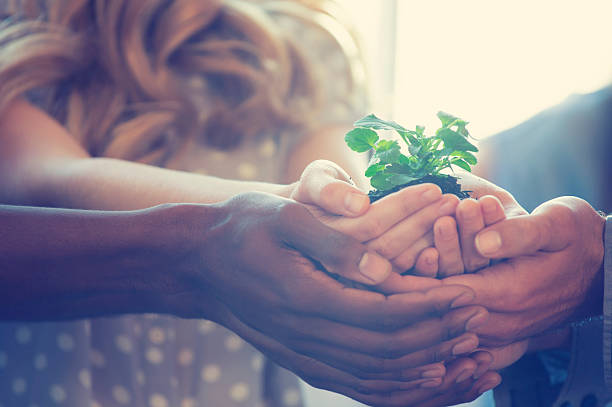 growth concept. group holding a seedling plant. - responsible business stock photos and pictures