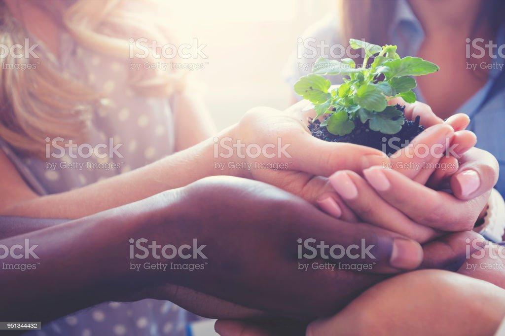 Wachstum-Konzept.  Fraktion hält ein Setzling plant. – Foto