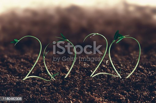 2020 seedlings showing growth and farming concept