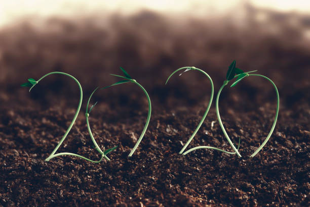 2020 growth concept stock photo