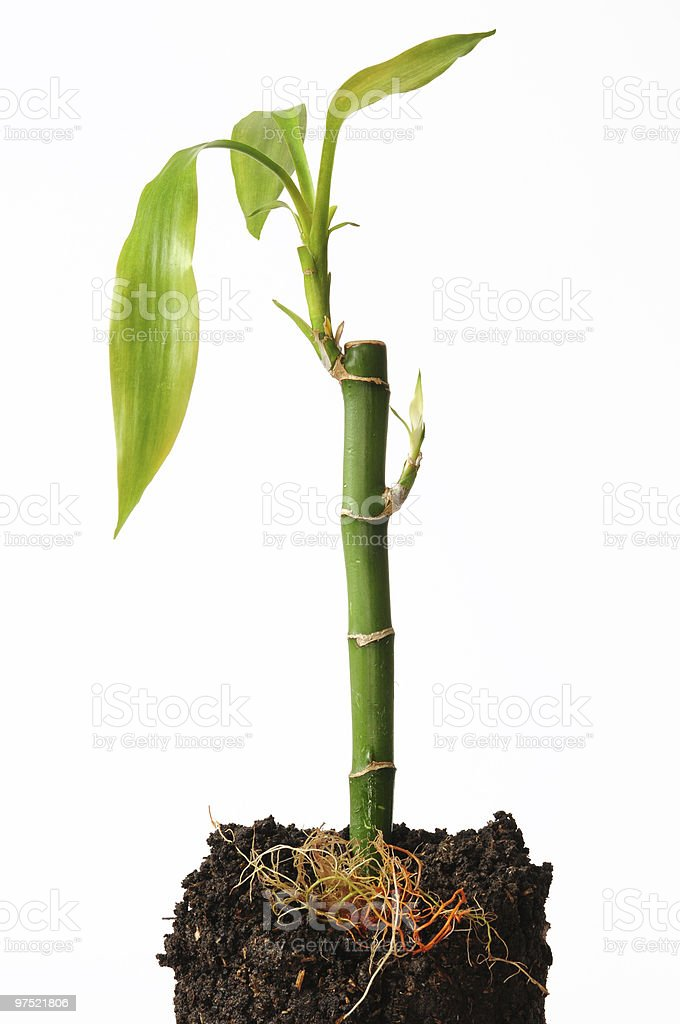 Growth. Concept. royalty-free stock photo