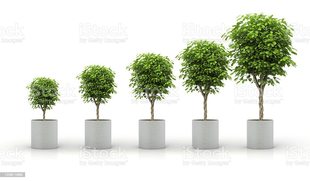 Growth concept with plant in growing stages stock photo