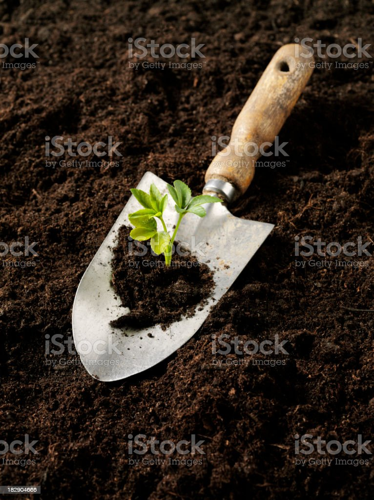 Growth in a  Gardening Trowel royalty-free stock photo