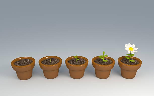 crecimiento en cinco pasos - sequence animation fotografías e imágenes de stock