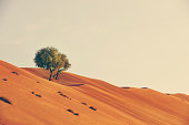 two trees growing in the desert of the sultanate of oman.