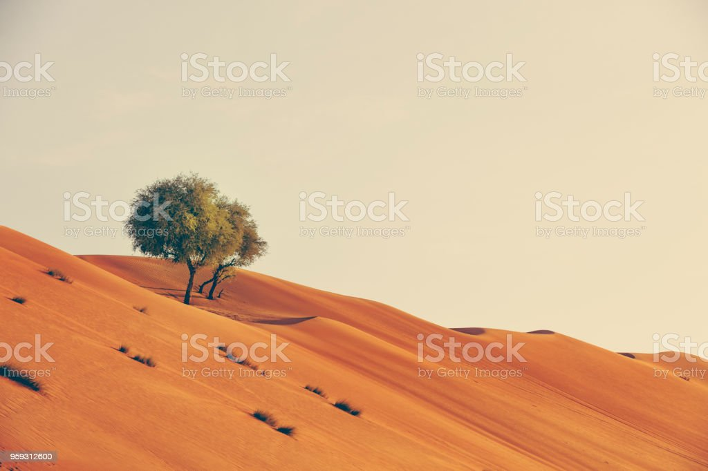 growth in the desert of oman stock photo