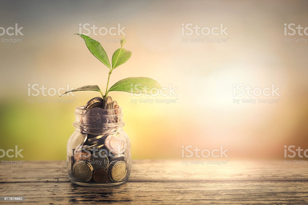 Growth of a plant - growth of a business stock photo