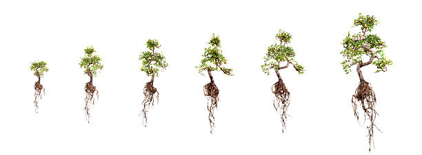 growth - tree roots stock pictures, royalty-free photos & images