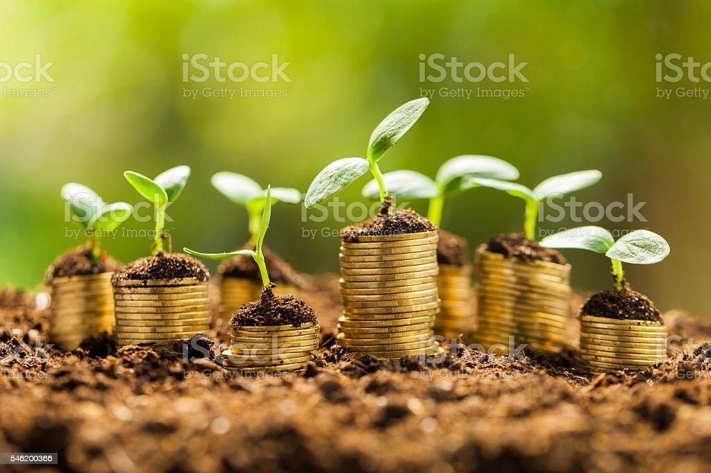 El crecimiento  - foto de stock