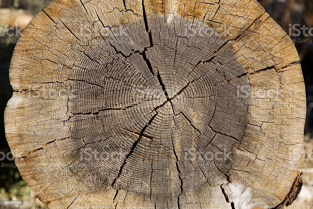 Growth Rings royalty free stockfoto
