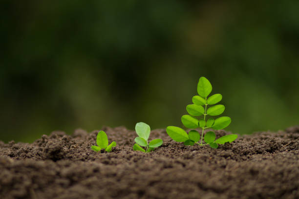 Growth vegetable and financing concept stock photo