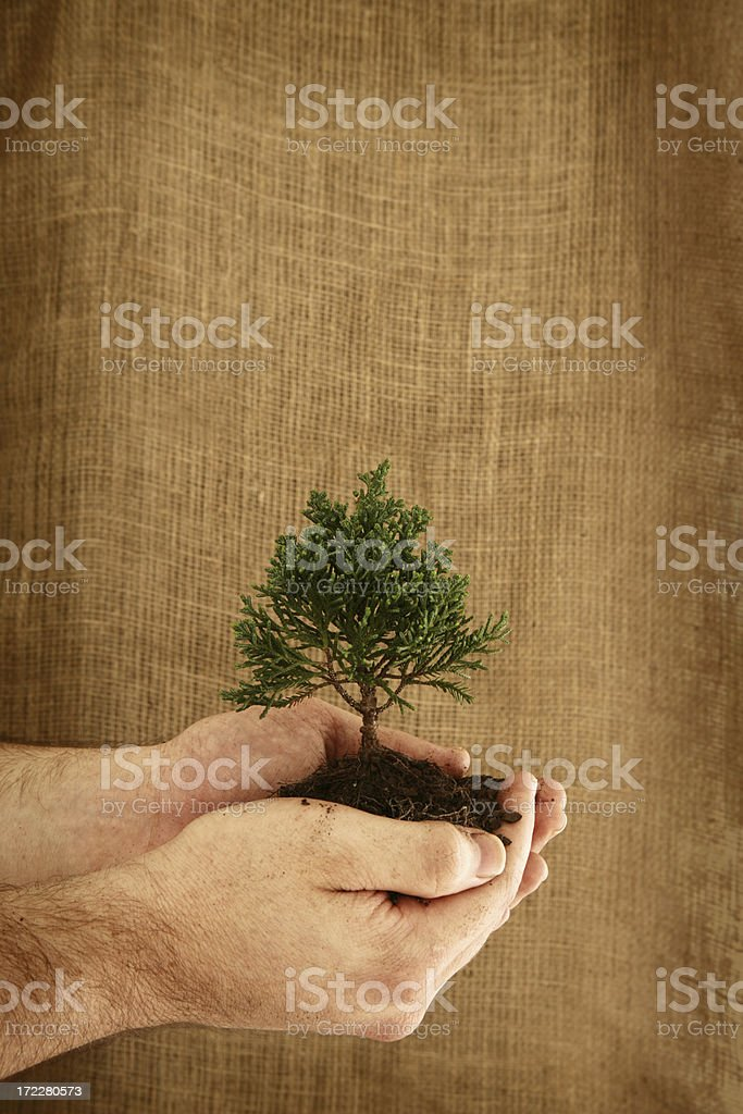 Growth with Copyspace royalty-free stock photo