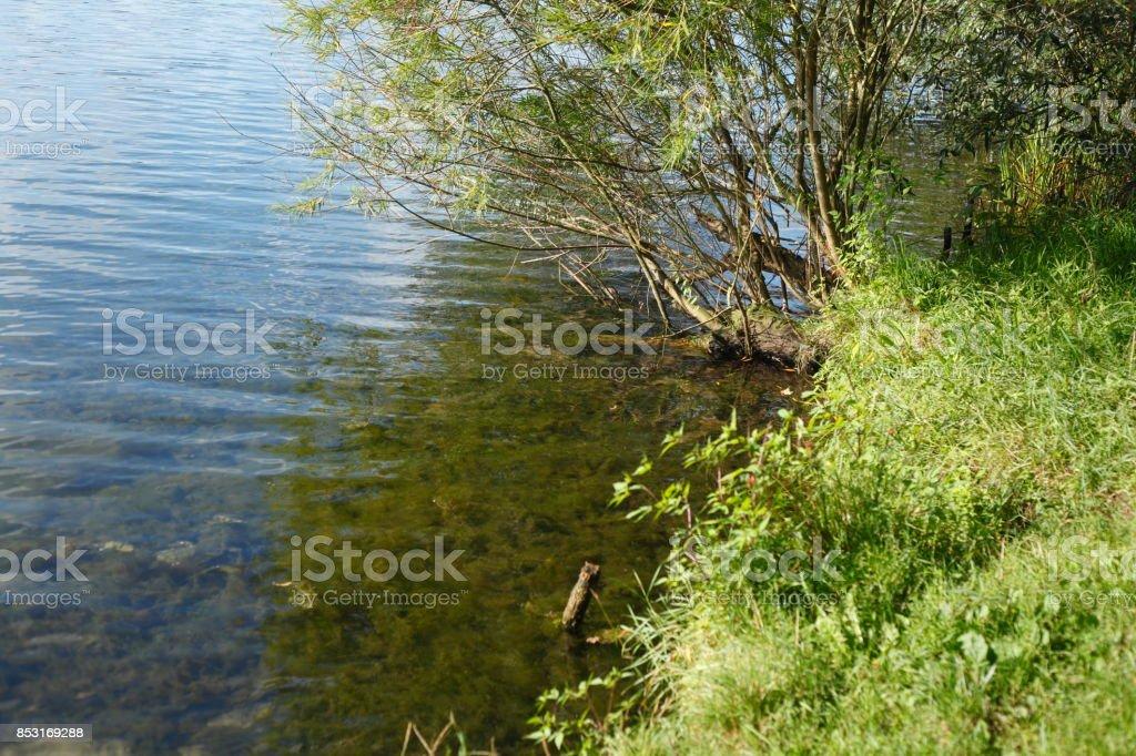 Gräser an einem Seeufer stock photo