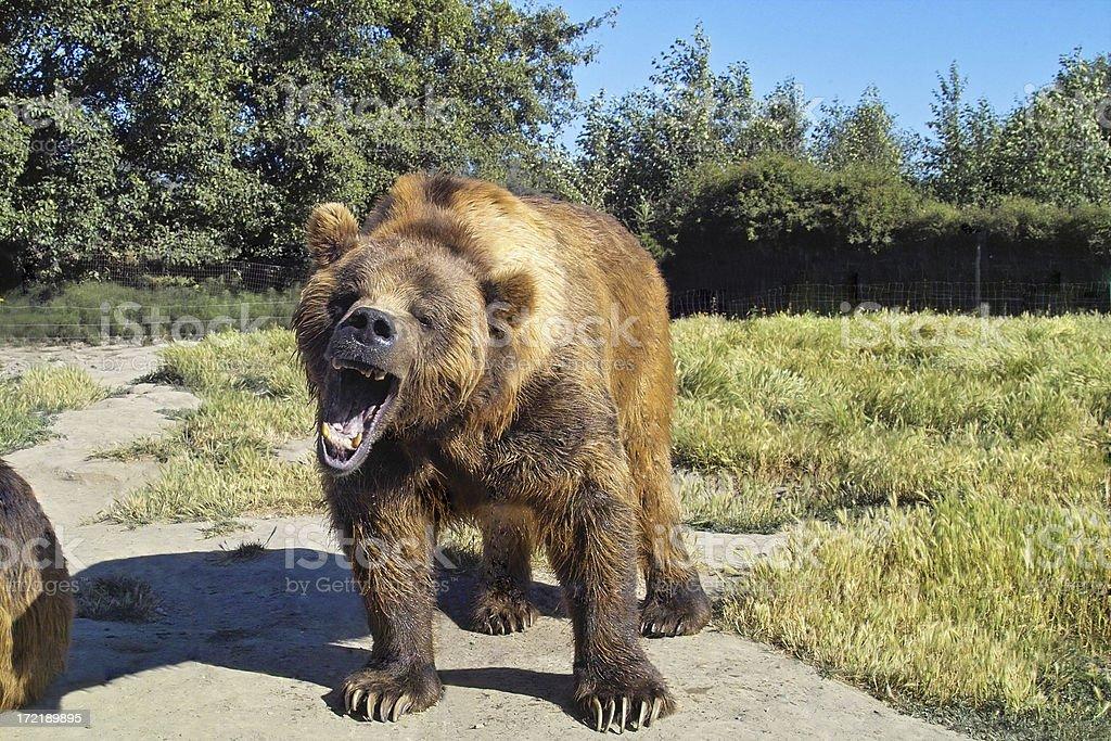 Grumpy Bear stock photo