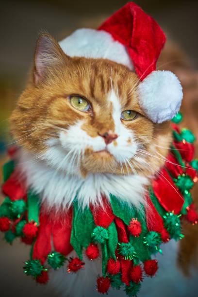 Grumpy cat in santa hat picture id962701822?b=1&k=6&m=962701822&s=612x612&w=0&h=x0 w99dol1iae0i7qpjgvacagafkrppvvdsxt rgbri=